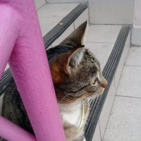 Этого котика приютили добрые люди. :: Анна Приходько