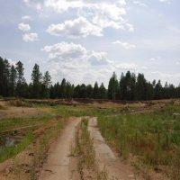 По полям, по лесамю :: Andrad59 -----