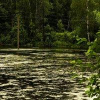 На реке :: Александр