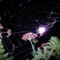 За плетением паутины... :: Valentina