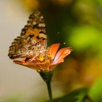 бабочка :: юлия макухина