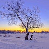 Дерево у реки :: Дубовцев Евгений
