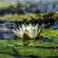 На озере. :: Константин Ушмаев