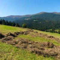 Солнечный день в горах :: Сергей Форос