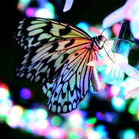 butterfly :: Алла Черных