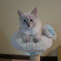 Мою мебель не трогать! :: Людмила Огнева