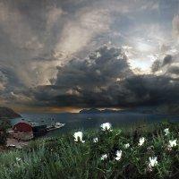 Цветут каперсы на летнем берегу :: viton