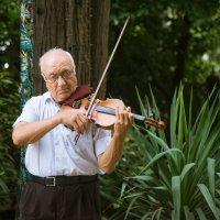 Скрипач из парка Ривьера :: cfysx