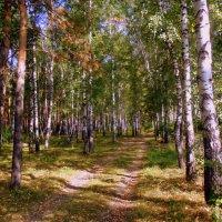Скоро осень , за окнами август ... :: Мила Бовкун
