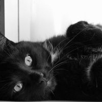 Кот :: Любовь Бутакова