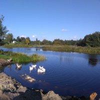 На речке возле мельницы :: Mariya laimite