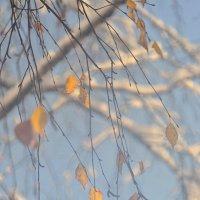 Дыхание зимы :: Гриша  6х9 или 9х12