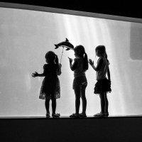 аквариум :: Slava Hamamoto