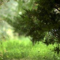 Лесной эфир :: Zergotron