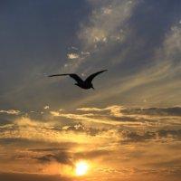 Провожая солнце :: valeriy khlopunov