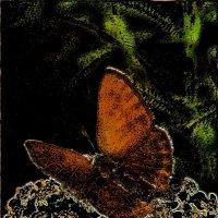 Бабочка :: Нина Корешкова