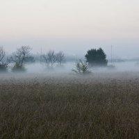 Утренний  туман :: Виктор