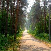 Дорога в лесу :: Вячеслав Баширов