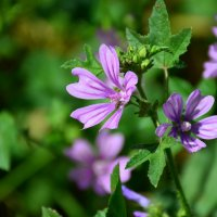 Муха на цветке. :: Оля Богданович