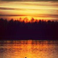 Одинокий лебедь на закате :: Ольга