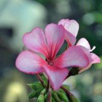 два цветочка :: Марина Титкова