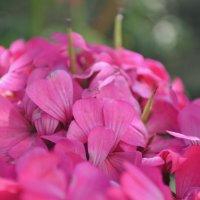 цветочки :: Марина Титкова