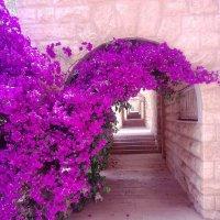 Иерусалим :: Anna Sokolovsky