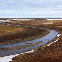 Арктическая тундра :: Леонид Сергиенко