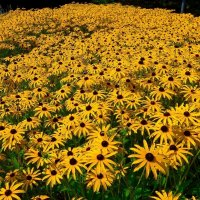 Осенние цветы :: Nina Yudicheva