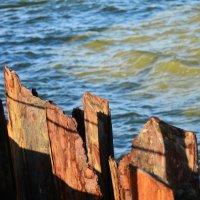 Море и металл :: Татьяна
