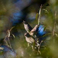 птицы :: Евгений