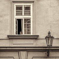 Девочка в окне :: Lidiya Dmitrieva