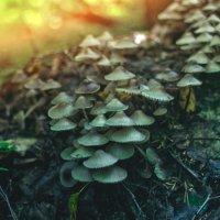 по грибы :: Тася Тыжфотографиня