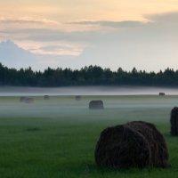 Поле туман, вечер, :: Владимир Миронов