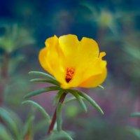 летние цветы 11 :: Дмитрий Барабанщиков