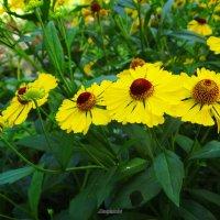 Яркие краски уходящего лета... :: Антонина Гугаева