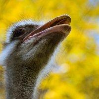 Гордый птиц :: cfysx