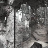 Зоопарк на Пальмире :: Елена Мартынова