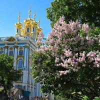 Екатерининский дворец. Весна :: Наталья