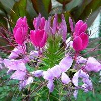цветы  лета. :: Ivana