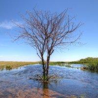 В синем море-океане Да на острове Буяне Древо высится средь волн. :: Сергей