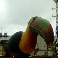 Расписная птица на петербургской крыше. :: Светлана Калмыкова