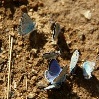 Бабочкины посиделки :: Светлана Попова