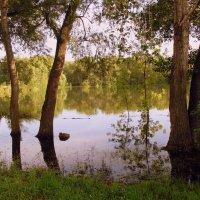 На реке. :: Мила Бовкун