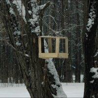 скворечник в лесу :: Юлия Денискина