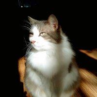 Солнечный кот.. :: Анна Приходько