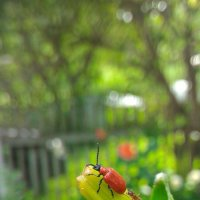 жук + муравей :: Александр 6769