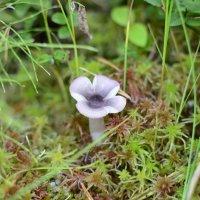 грибочек-цветочек :: владимир полежаев