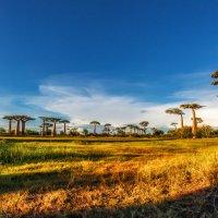 Сказочный Мадагаскар! :: Александр Вивчарик