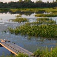 На озере :: Вера Андреева